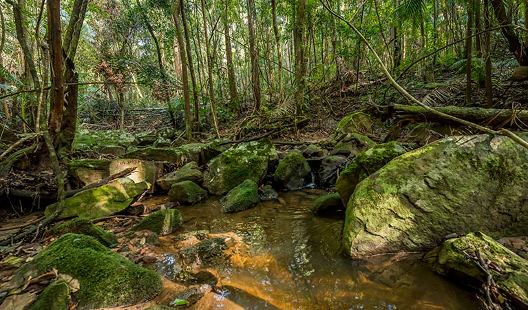 Palm Grove Nature Reserve - Accommodation Redcliffe