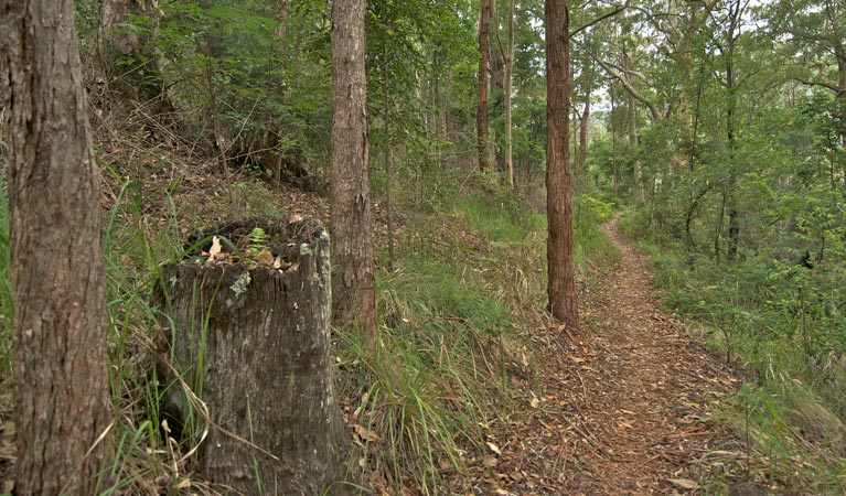 Border loop walk - Accommodation Redcliffe