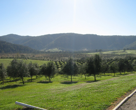 Hastings Valley Olives - Accommodation Redcliffe