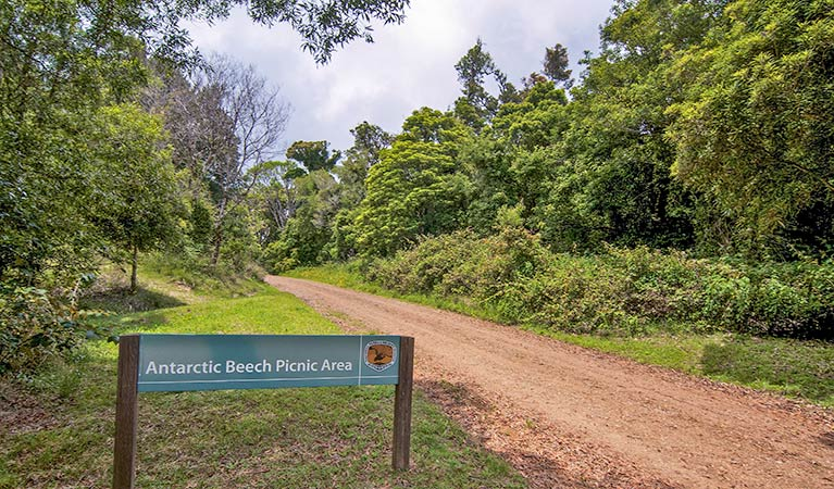 Antarctic Beech picnic area - Accommodation Redcliffe