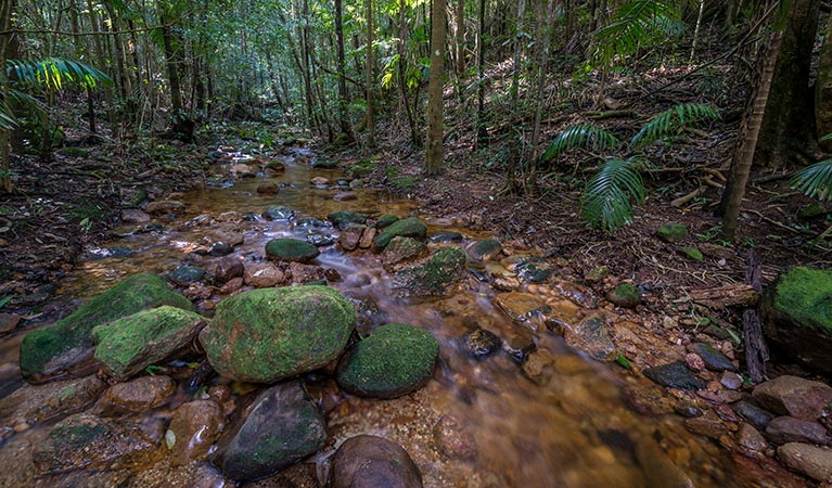 Starrs Creek picnic area - Accommodation Redcliffe