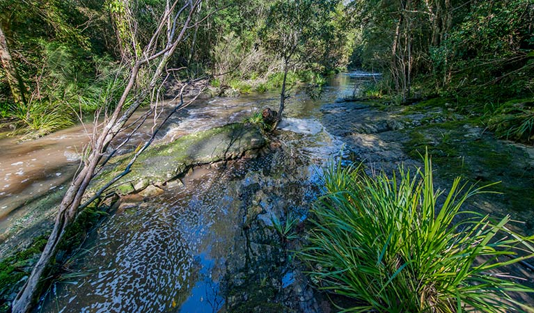 Dawson River walking track - Accommodation Redcliffe