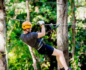 TreeTop Challenge Currumbin - Accommodation Redcliffe