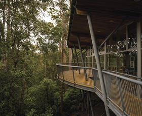 Tarkine Forest Adventures - Dismal Swamp - Accommodation Redcliffe