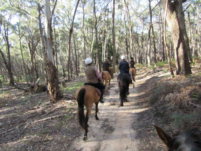 Silver Brumby Trails - Accommodation Redcliffe