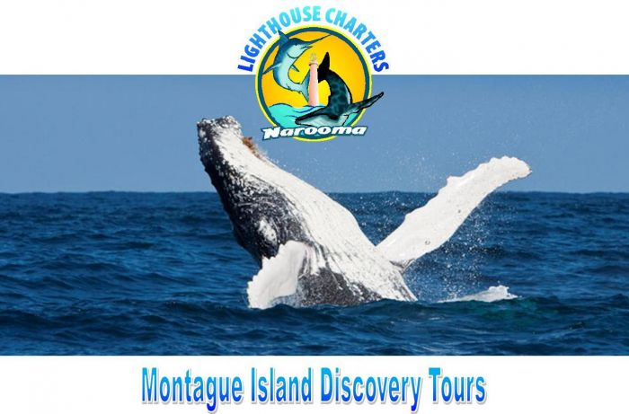 Lighthouse Charters Narooma - Accommodation Redcliffe