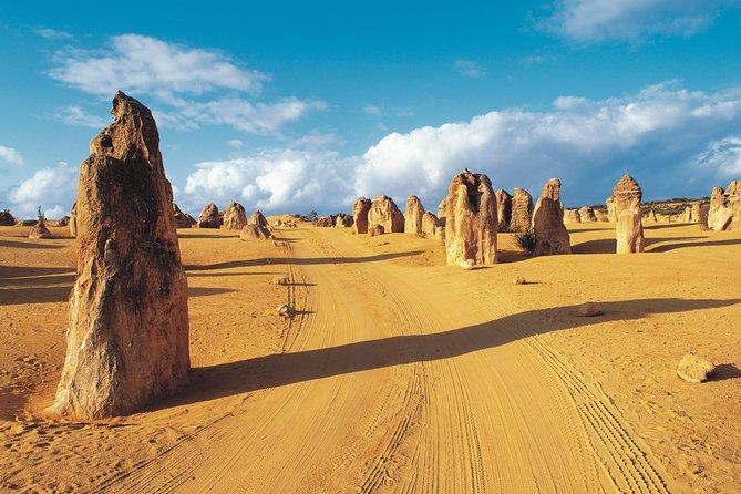 Pinnacles Desert Koalas and Sandboarding 4WD Day Tour from Perth - Accommodation Redcliffe
