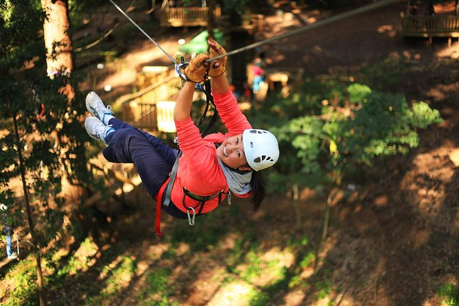 Trees Adventure Lane Poole Park - Treetop  Zipline Experience - Accommodation Redcliffe