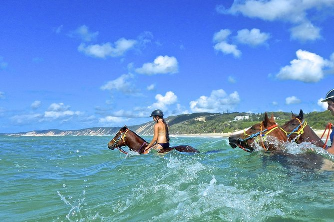Horse Swimming Ride from Rainbow Beach - Accommodation Redcliffe