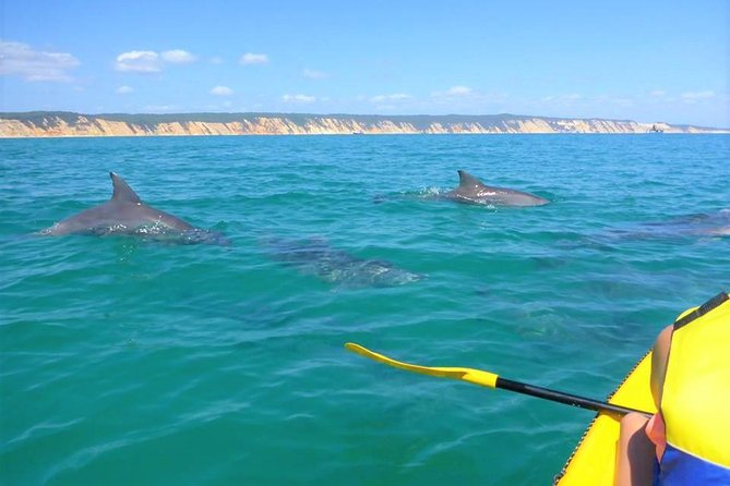 Half-Day Kayak with Dolphins and 4WD Beach Drive from Rainbow Beach - Accommodation Redcliffe