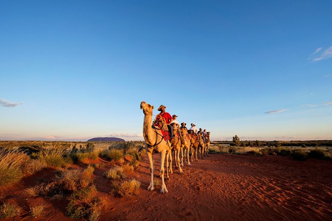 Uluru Camel Express Sunrise or Sunset Tours - Accommodation Redcliffe