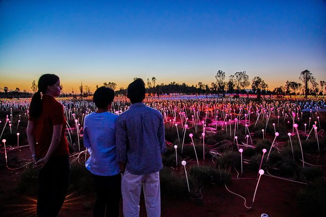 Uluru Field of Light Sunrise Tour - Accommodation Redcliffe