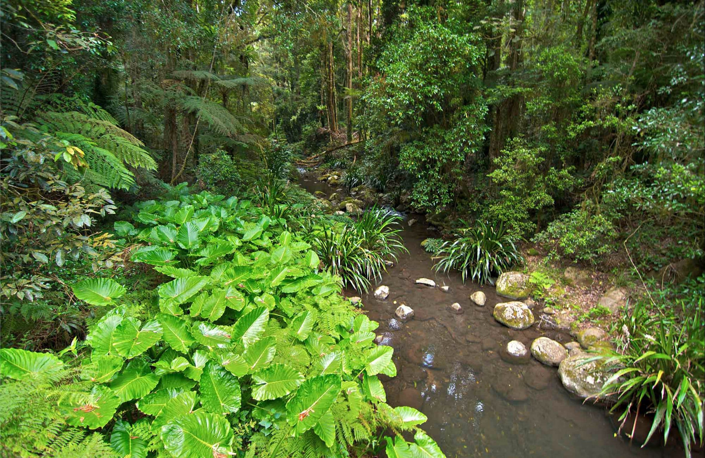 Brindle Creek Walking Track - Accommodation Redcliffe