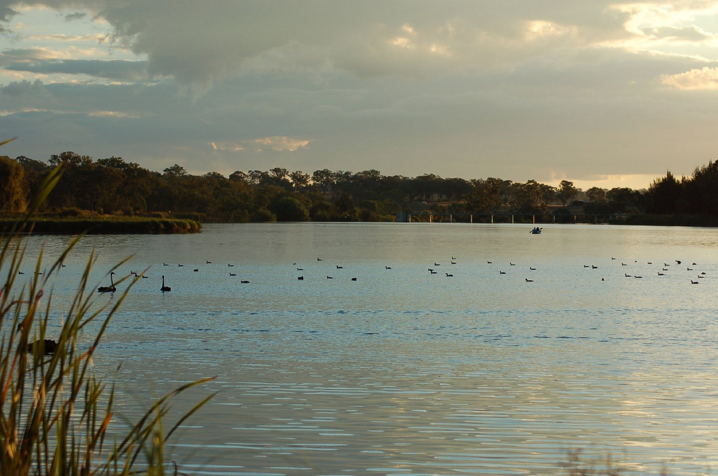 Lake Inverell Reserve - Accommodation Redcliffe
