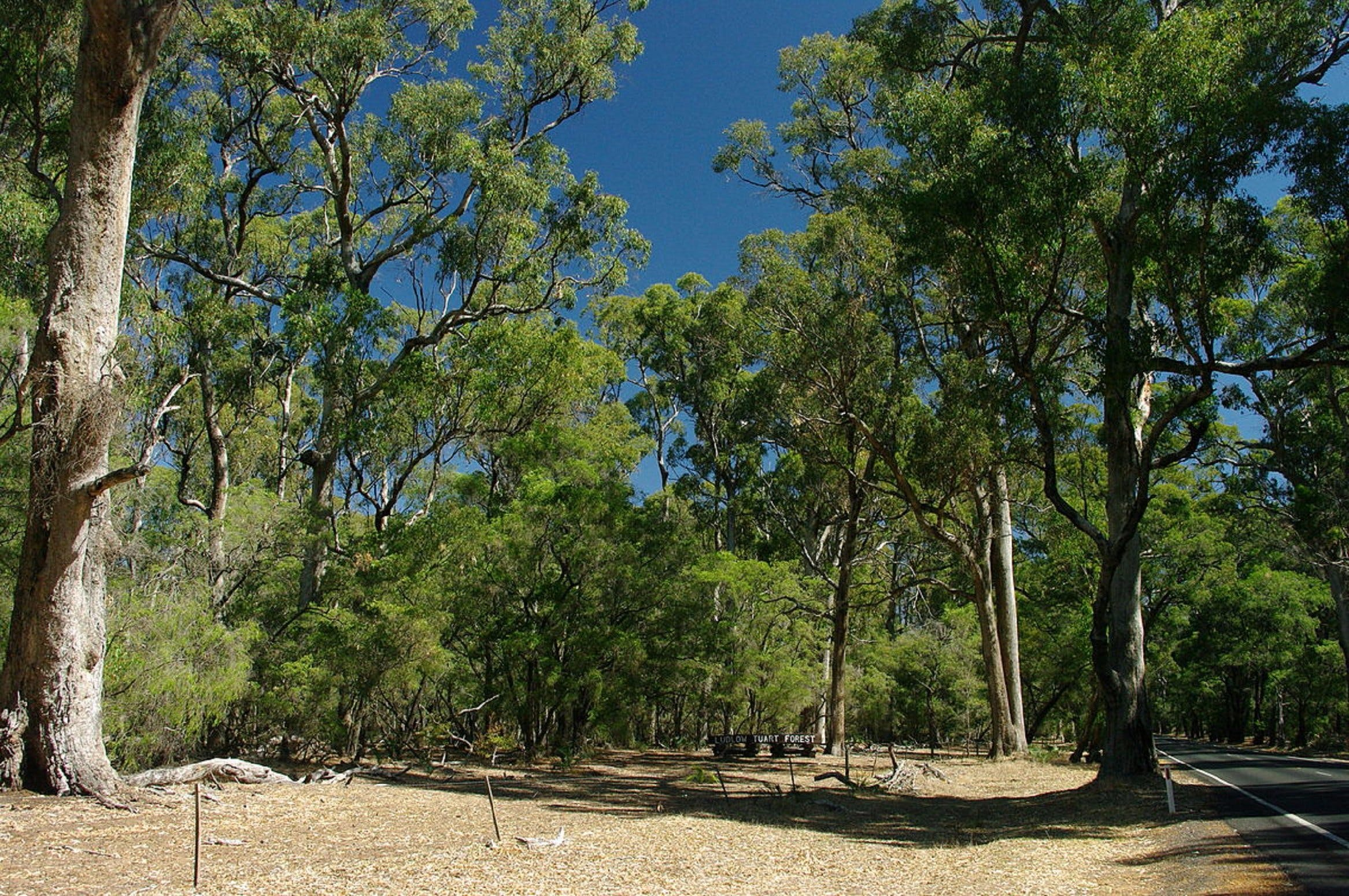Maidens Tuart Forest - Accommodation Redcliffe
