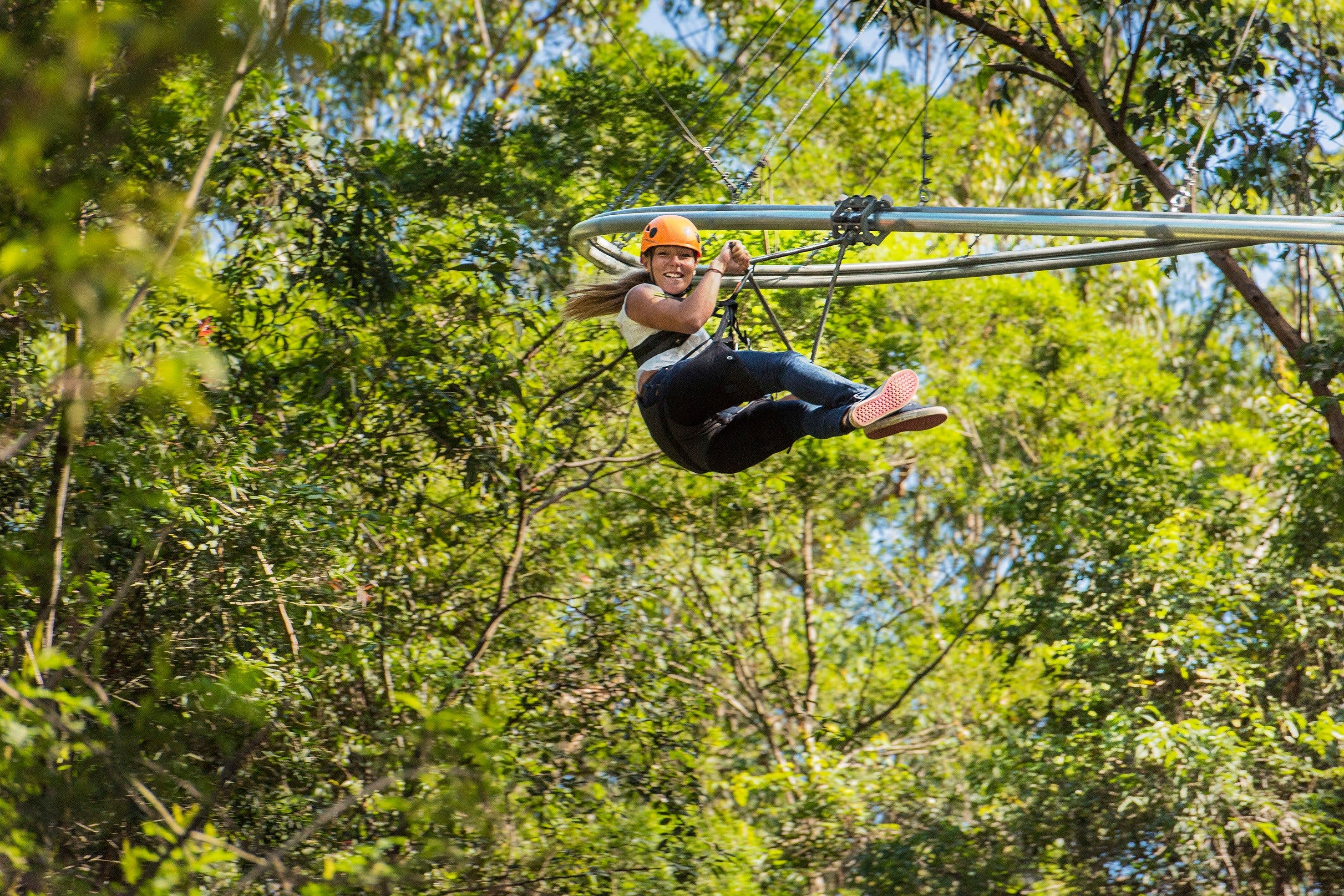 TreeTop Crazy Rider - Accommodation Redcliffe