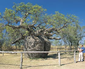 Boab Prison Tree - Accommodation Redcliffe