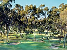 Tanunda Pines Golf Club - Accommodation Redcliffe