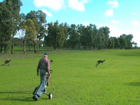 Coffin Bay Golf Club - Accommodation Redcliffe