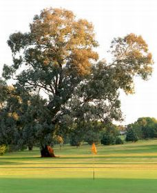 Cowra Golf Club - Accommodation Redcliffe