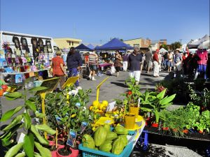 Maclean Community Monthly Markets - Accommodation Redcliffe