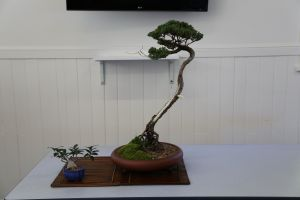 Wauchope Bonsai Workshop Group - Accommodation Redcliffe