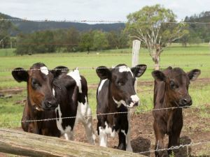 Bandon Grove Farm Tours - Accommodation Redcliffe