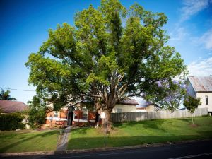 Big Bat Wildlife and Eco Festival - Accommodation Redcliffe