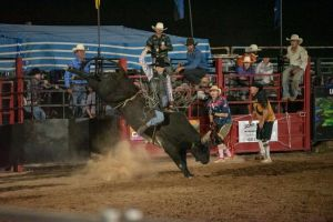 Black Opal Bull and Bronc Ride - Accommodation Redcliffe