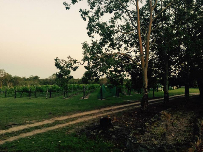 Brierley Wines - Accommodation Redcliffe