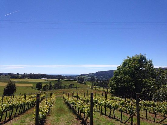 Barringwood Vineyard and Cellar Door Restaurant - Accommodation Redcliffe