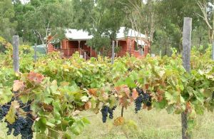 Fergies Hill Spa Cottage  Granite Ridge Wines - Accommodation Redcliffe