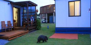 BIG4 Kelso Sands Holiday  Native Wildlife Park - Accommodation Redcliffe